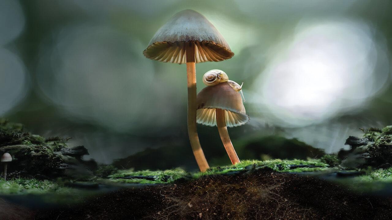 Telah Ada Film Khusus Jamur Dengan Keunikannya Di The Wonderful Fungi